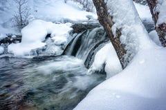 Forest Waterfalls och en kall vår matade floden arkivfoto