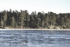 Forest on waterfront Royalty Free Stock Photo