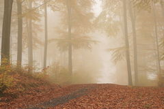 Forest way Royalty Free Stock Images