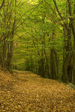 Forest way Stock Photography