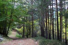Forest Way Fotos de Stock Royalty Free