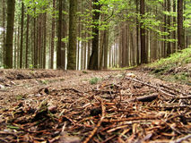 Forest way. With the pine needles stock images