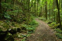 Forest Way Foto de archivo libre de regalías