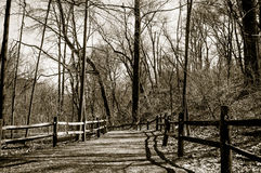 Forest way royalty free stock photography