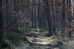 Forest way. A forest way with light and shadow stock photos