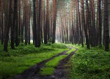Forest way in the morning stock images