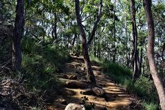 Forest Way at Ngungun Glass House Mountains National Park Stock Photo
