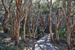 Forest Way at Noosa Heads National Park. Queensland Australia royalty free stock photos