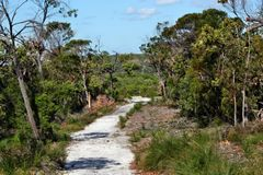 Forest Way at Noosa Heads National Park stock photo