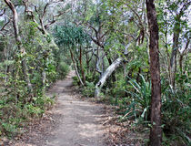 Forest Way at Noosa Heads National Park. Queensland Australia stock photo
