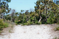 Forest Way at Noosa Heads National Park. Queensland Australia royalty free stock photography