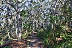 Forest Way at Noosa Heads National Park royalty free stock photos