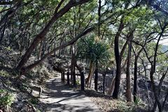 Forest Way at Noosa Heads National Park. Queensland Australia stock image