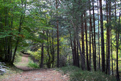 Forest Way royalty free stock photos