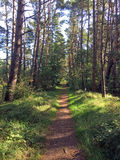 Forest way in sunny light Royalty Free Stock Image