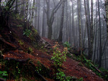 Forest on the way to Ajusco, Mexico. Photo was taken in May, 2015 during raining climbing on Ajusco, Mexico Royalty Free Stock Photos