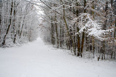 Forest way in winter Royalty Free Stock Image