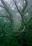 Forest Web photos stock