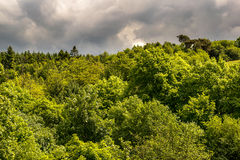 Forest in West Pennine Moors Royalty Free Stock Image