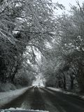 Snow Tree Road stock images