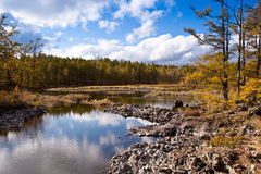 Forest and wetland Stock Photography
