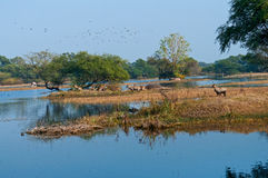 Forest wetland. Beautiful view of forest wetland Bharatpur National Park, India Royalty Free Stock Images