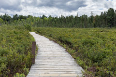 Forest Wetland Boardwalk Trail Royalty-vrije Stock Afbeeldingen