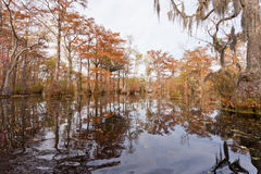 Forest wetland Merchants Millpond NC State Park US Stock Photography