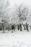 forest white Στοκ Εικόνες