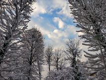 Forest in white and beautiful sky Stock Photo