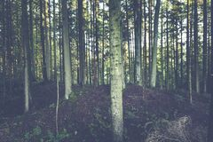 Forest of White Trees Royalty Free Stock Image