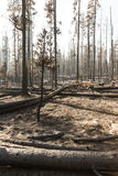 The forest after a wild fire. Burned charred trees some still standing after the National Creek Complex Fire burned this large Section Of Crater Lake National Stock Photography