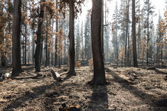 The forest after a wild fire Stock Photos