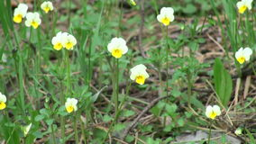Forest wild flowers stock video footage