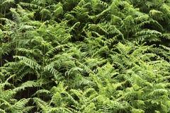Forest wild green bush. Forest wild nature green color bush fern flora earth garden ground sun Stock Photography