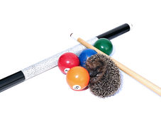 Forest wild hedgehog and billiard accessories isolated Stock Photo