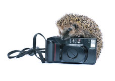 Forest wild hedgehog with a camera isolated Royalty Free Stock Photos
