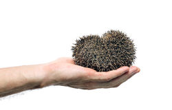 Forest wild hedgehog Stock Image