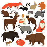 Forest Wild Life Isolated-Tiere eingestellt Stockbilder