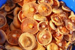 Wild mushrooms grow on the stump Royalty Free Stock Photos