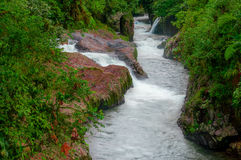 Forest wild river landscape in the amazon region, rapids stream water Royalty Free Stock Photos