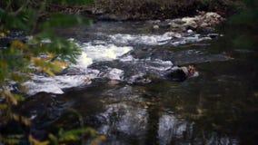 Forest wild river landscape
