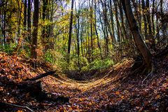 Forest wilderness in autumn full of colorful leaves stock photography
