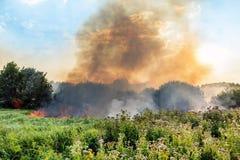 Forest Wildfire Brandend gebied van droge gras en bomen Zware rook tegen blauwe hemel Wilde brand toe te schrijven aan heet winde stock afbeeldingen