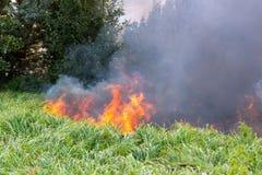 Forest Wildfire Brandend gebied van droge gras en bomen Zware rook tegen blauwe hemel Wilde brand toe te schrijven aan heet winde stock foto