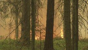 Forest Wildfire Brandend gebied van droge gras en bomen Zware rook tegen hemel Wilde brand toe te schrijven aan heet winderig wee stock footage