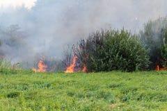 Forest Wildfire Brennendes Feld des trockenen Grases und der Bäume Schwerer Rauch gegen blauen Himmel Wildes Feuer wegen des heiß stockfotografie