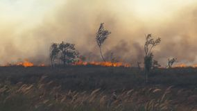 Forest Wildfire Brennendes Feld des trockenen Grases und der Bäume Schwerer Rauch gegen Himmel Wildes Feuer wegen des heißen wind stock footage