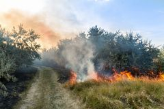 Forest wildfire. Burning field of dry grass and trees. Heavy smoke against blue sky. Wild fire due to hot windy weather royalty free stock photo