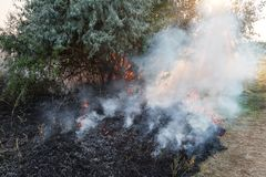 Forest wildfire. Burning field of dry grass and trees. Heavy smoke against blue sky. Wild fire due to hot windy weather. In summer. rescuer inspecting disaster stock photos